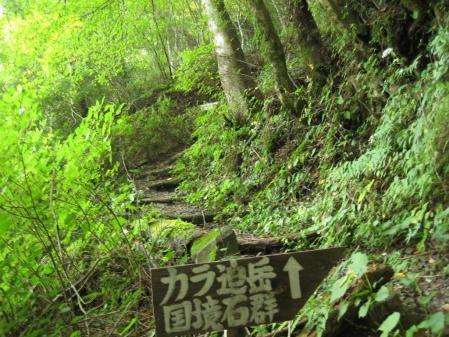 カラ迫山の花 003 - コピー