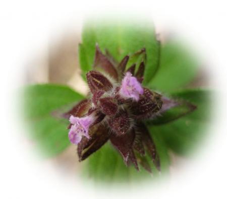 カラ迫山の花 099 - コピー