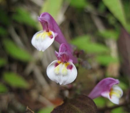 カラ迫山の花 117 - コピー