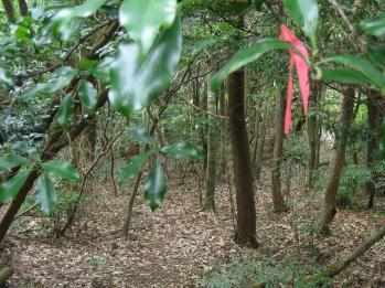 カラ迫山の花 130 - コピー