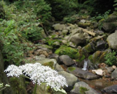 カラ迫山の花 164 - コピー