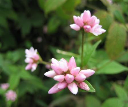 カラ迫山の花 182 - コピー