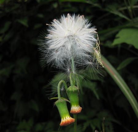 カラ迫山の花 180
