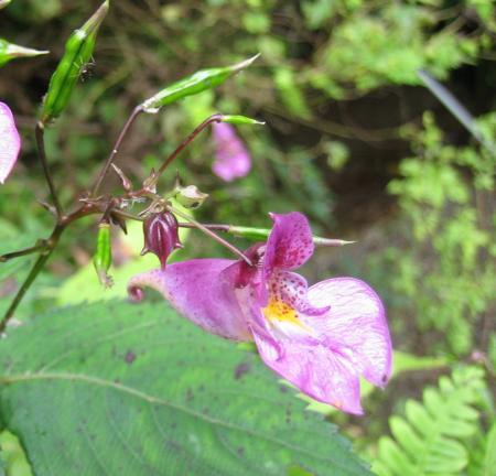 カラ迫山の花 187 - コピー
