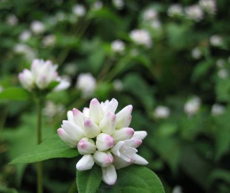 カラ迫山の花 184 - コピー