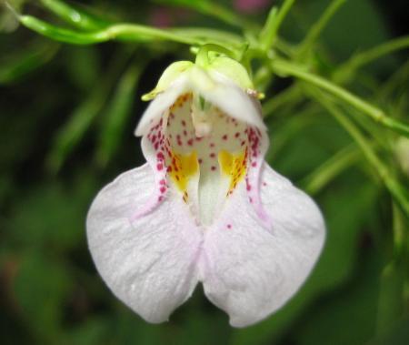 カラ迫山の花 168 - コピー