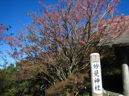 雲仙岳 バンブー 054