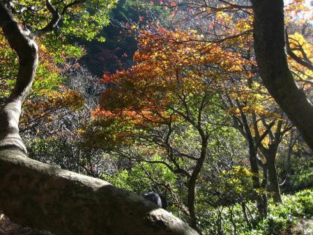 雲仙岳 バンブー 082 - コピー