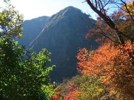 雲仙岳 バンブー 117 - コピー