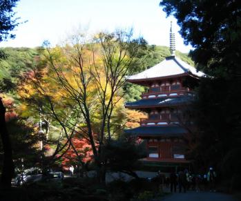 清水の銀杏 018 - コピー