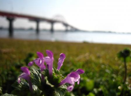 新田大橋 058 - コピー