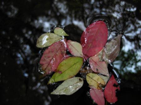 小岱山の花 099 - コピー