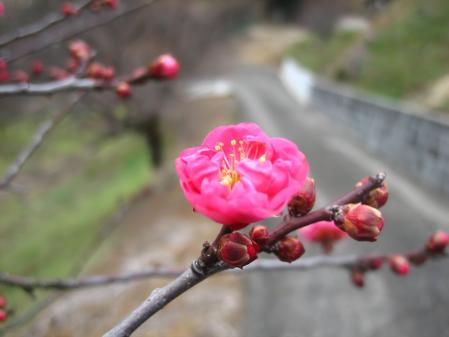 立春 080
