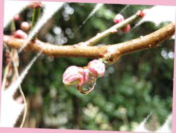 お花の雛 028 - コピー