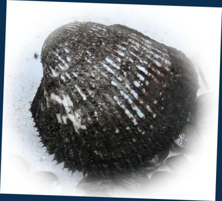 有明海の珍味 003 - コピー