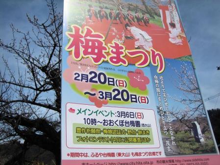 大山町の梅 059 - コピー