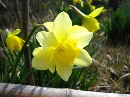 清水の花 079