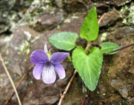 清水の花 136