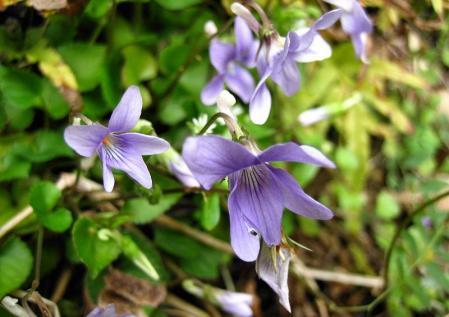 清水の花 133