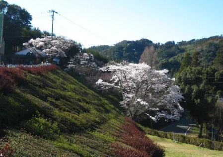 カラ迫岳 092 - コピー