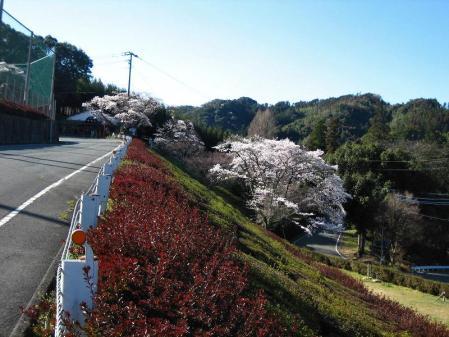 カラ迫岳 091 - コピー