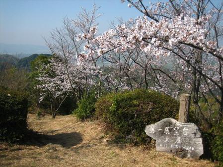 清水の桜 028
