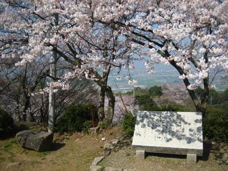 清水の桜 037