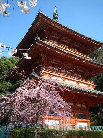 清水の桜 053