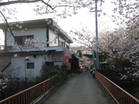 清水の桜 141