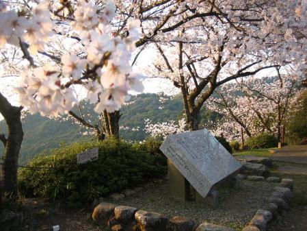 清水の桜 162