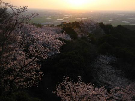 清水の桜 176