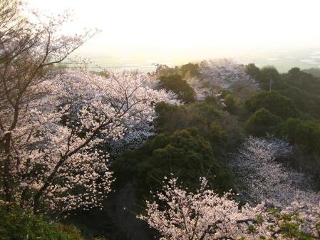 清水の桜 173