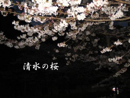清水の桜 213 - コピー