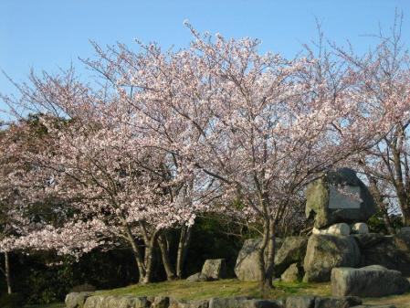 清水の桜 123