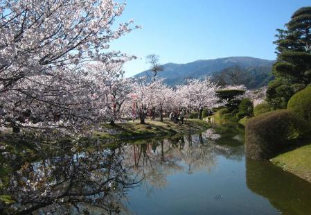 小城公園の桜 052