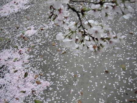 花散る清水 066