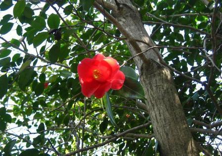 小岱山の花 005 - コピー