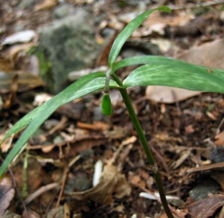 カラ迫岳の花 083 - コピー
