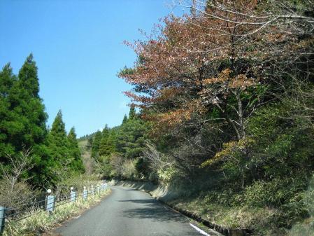 天山の花 011 - コピー