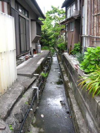 清水の花春雨 154 - コピー