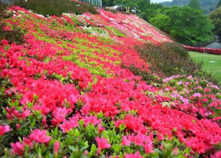 石割岳 099