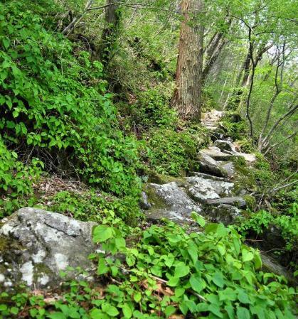石割岳 047