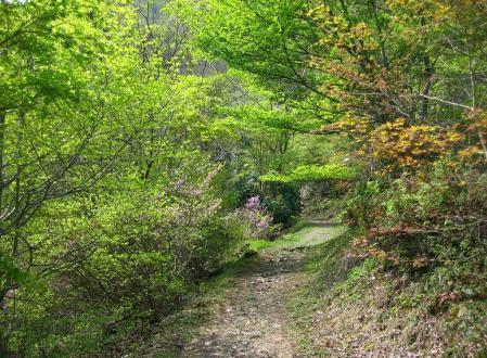 石割岳 036