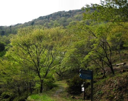 石割岳 029
