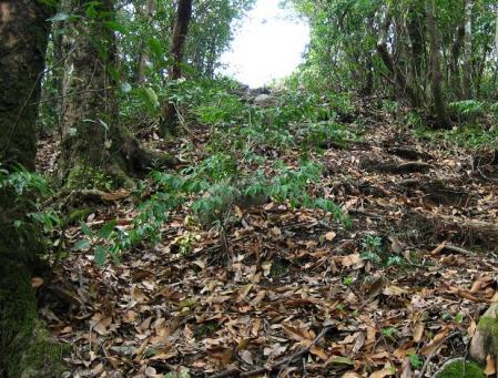 石割岳 063