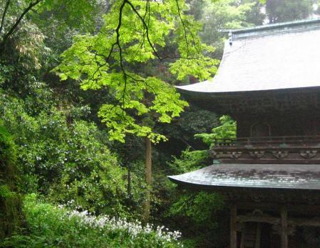 清水の花春雨 138
