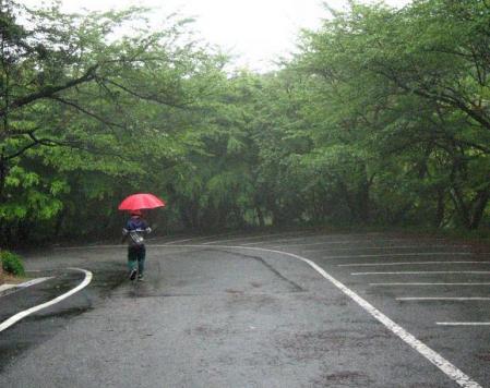 清水の花春雨 062