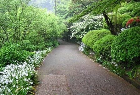 清水の花春雨 133