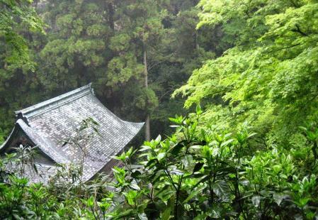 清水の花春雨 134