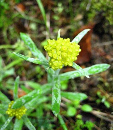 清水の花春雨 066